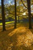Herbst-Park Stockbilder