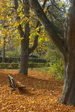 Herbst-Park-Bank Stockfotos