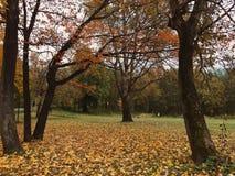 Herbst parklife lizenzfreies stockfoto