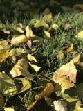Herbst in Peking Lizenzfreies Stockbild