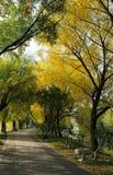 Herbst-Pfad Lizenzfreies Stockbild