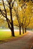 Herbst-Pfad Stockbild