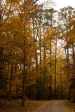 Herbst-Pfad Lizenzfreie Stockfotografie