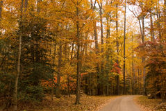 Herbst-Pfad Stockfoto