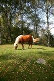 Herbst-Pferd lizenzfreie stockfotos