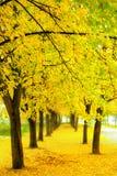 Herbst in Polen Stockbild