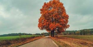 Herbst in Polen stockfotografie
