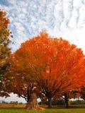 Herbst Pom Pom Lizenzfreies Stockfoto