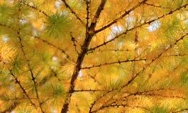 Herbst, positive Landschaft stockfotografie