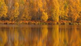 Herbst - Reflexion der Bäume im Wasser Stockfotografie