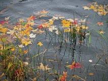 Herbst-regnerischer Teich Stockfotos