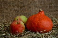Herbst Reife Äpfel und Kürbis Hokkaido-Nahaufnahme auf einem Substrat des Grases Stockbild