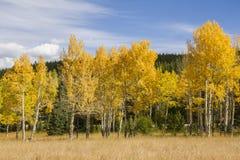 Herbst in Rocky Mountain National Park Stockbilder
