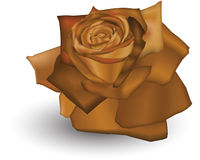 Herbst Rose Stockbild