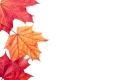 Herbst rot und Orangenblätter stockfotos