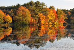 Herbst-Ruhm Lizenzfreie Stockfotos