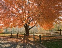Herbst-Ruhm stockfoto