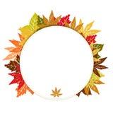 Herbst-rundes Feld Lizenzfreies Stockfoto