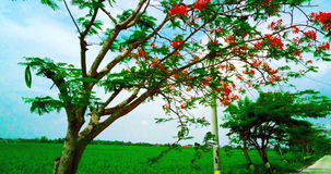 Herbst in Südostasien Lizenzfreies Stockfoto