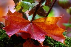 Herbst ` s Schönheits-Abschluss oben stockbild