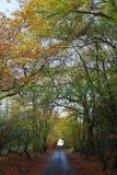 Herbst in Schottland stockfotos