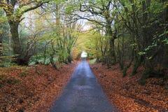 Herbst in Schottland stockfoto