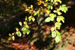 Herbst in Schottland lizenzfreies stockfoto