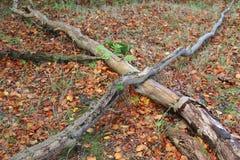 Herbst in Schottland lizenzfreie stockfotografie