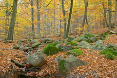Herbst in Schweden Stockfotografie