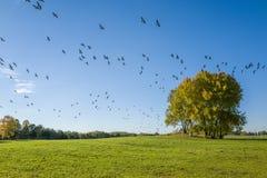Herbst in Schweden Lizenzfreie Stockfotos