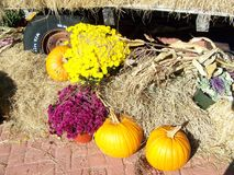 Herbst an seinem Besten Stockfoto