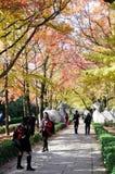 Herbst senery Lizenzfreies Stockbild