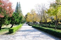 Herbst senery Stockfoto