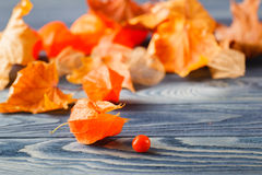 Herbst simbols, Phisalys auf dem Purplehearthintergrund Lizenzfreie Stockfotografie