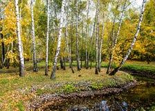 Herbst in Sokolniki Lizenzfreie Stockbilder