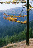 Herbst-Sonate Stockfotos