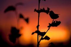 Herbst-Sonnenuntergang Lizenzfreies Stockfoto