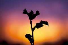 Herbst-Sonnenuntergang Lizenzfreie Stockbilder