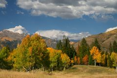 Herbst Splender stockbild