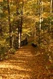 Herbst-Spur Lizenzfreies Stockfoto