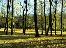 Herbst in Stadt 1 Stockbild