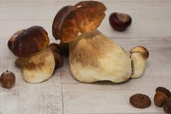 Herbst stil Leben mit Pilzen Lizenzfreies Stockbild