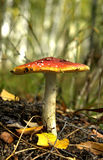 Herbst-Stillleben Stockfotografie