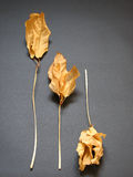 Herbst-Stimmung Lizenzfreies Stockfoto
