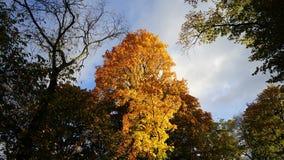 Herbst in Stockholm Lizenzfreie Stockfotos