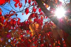 Herbst Sun Stockfoto