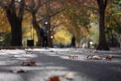 Herbst in Sydney, NSW, Australien lizenzfreies stockfoto