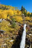 Herbst-Szene lizenzfreies stockfoto