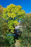 Herbst-Szene Lizenzfreie Stockbilder