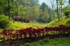 Herbst-Szene in Südchina Lizenzfreies Stockbild